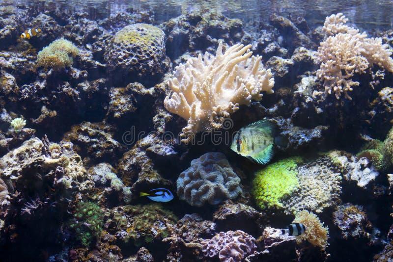 Acquario esotico e tropicale con i pesci fotografie stock