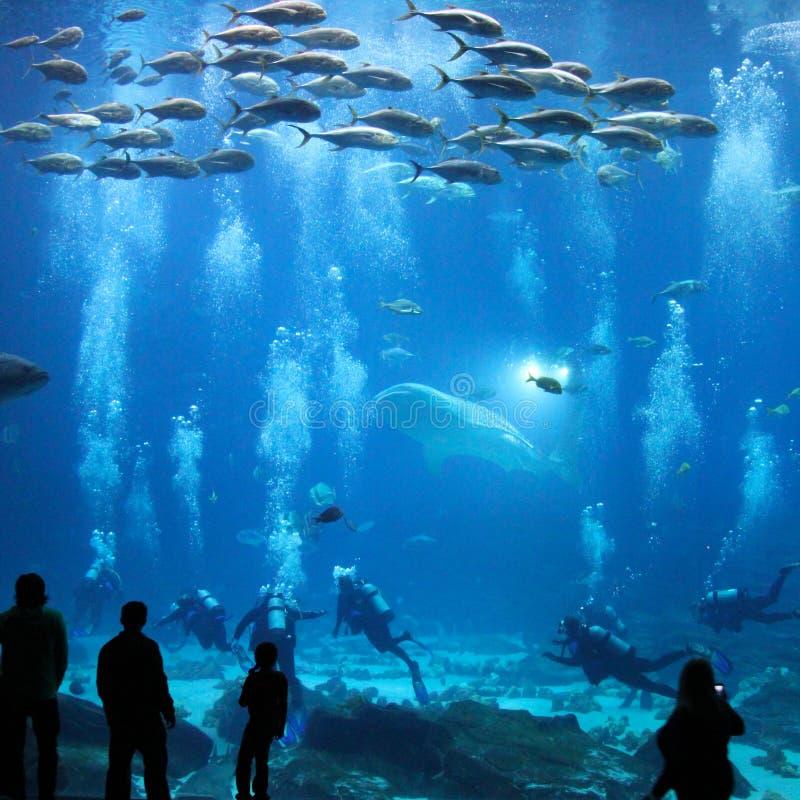 Acquario gigante fotografia stock libera da diritti