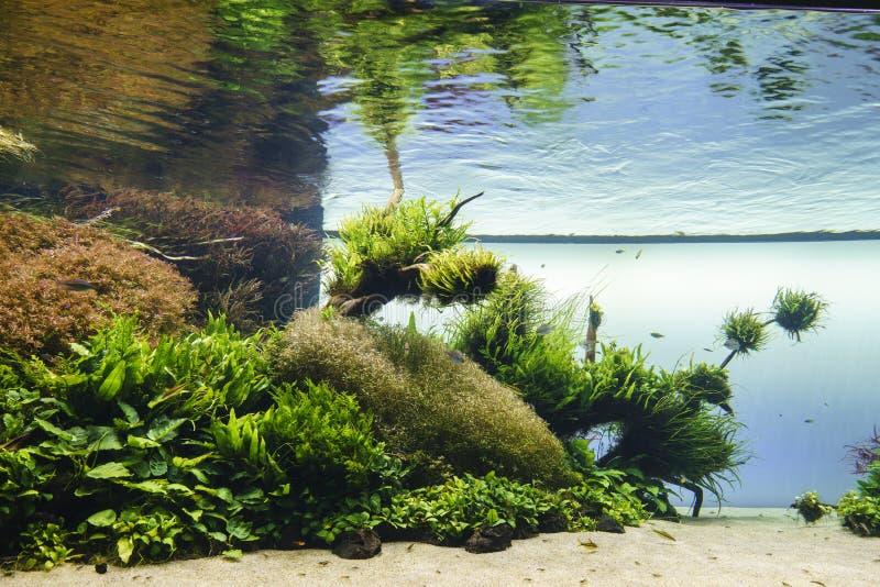 Acquario piantato immagine stock