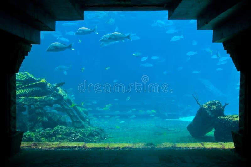 Acquario tropicale fotografia stock