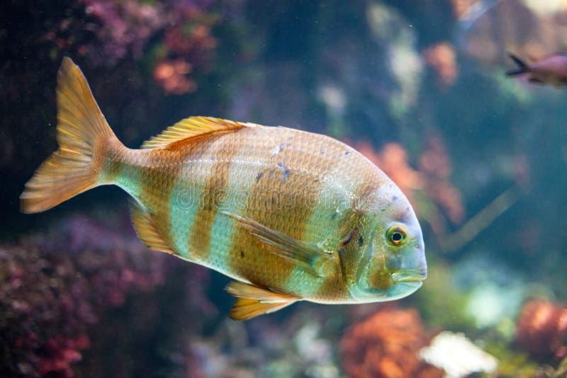 Acquario variopinto con i pesci fotografia stock