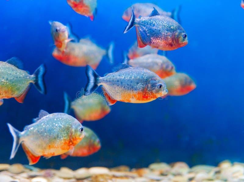 Acquario variopinto dei pesci immagine stock
