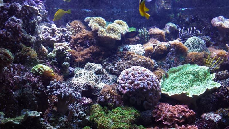 Acquatio pesci barcellona obrazy royalty free