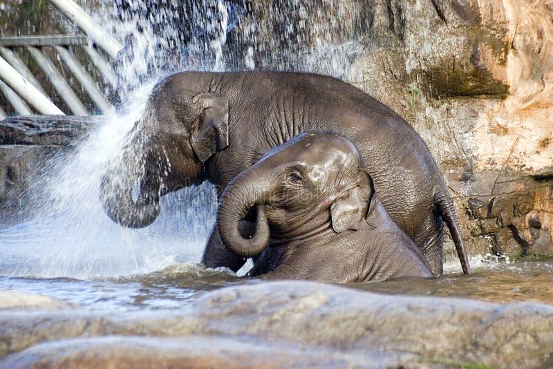 Acquazzone dell'elefante fotografia stock