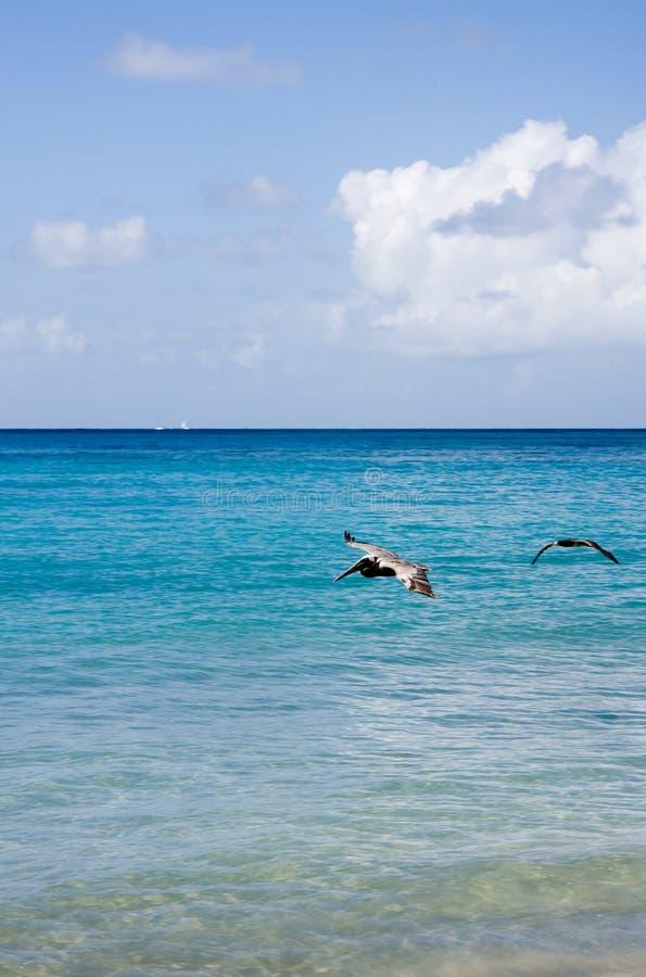 Acque caraibiche immagini stock