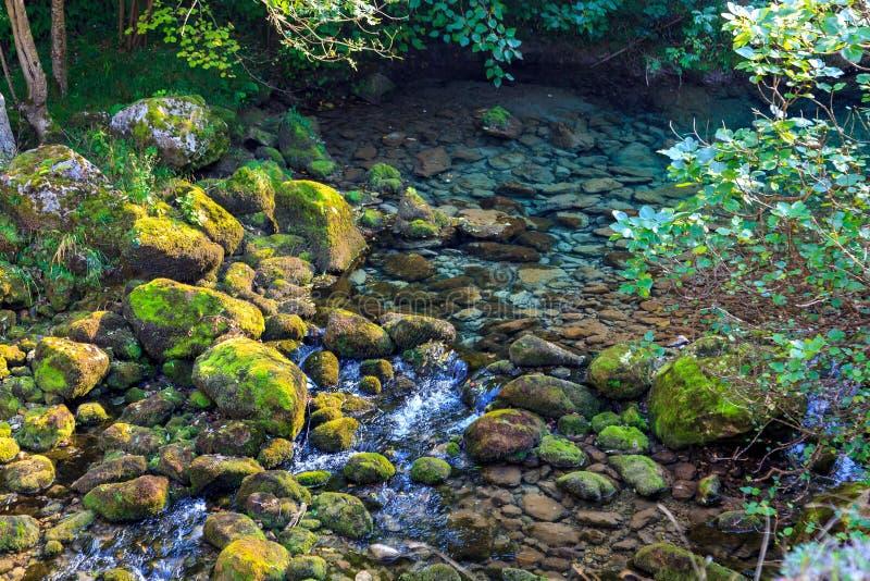Acque cristalline del fiume della montagna che vengono dal disgelo Parco nazionale del Picos de Europa immagine stock libera da diritti