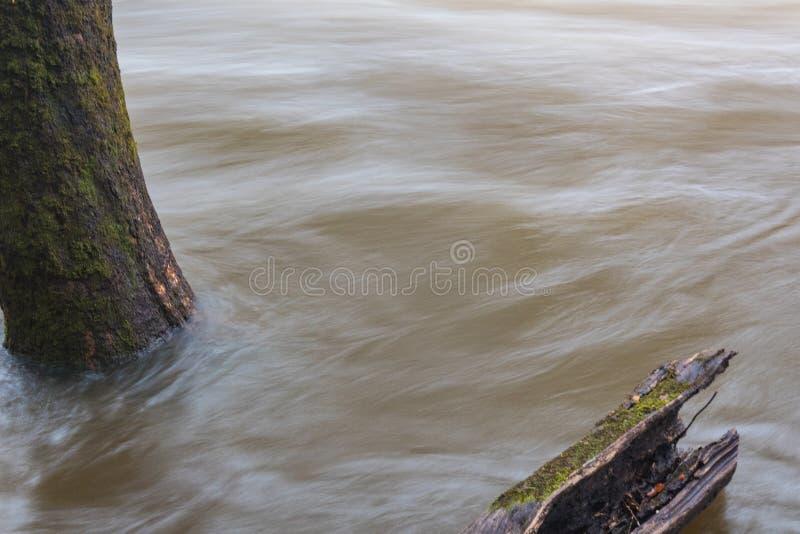 Acque di inondazione che turbinano intorno ad un albero, spazio per testo fotografia stock libera da diritti