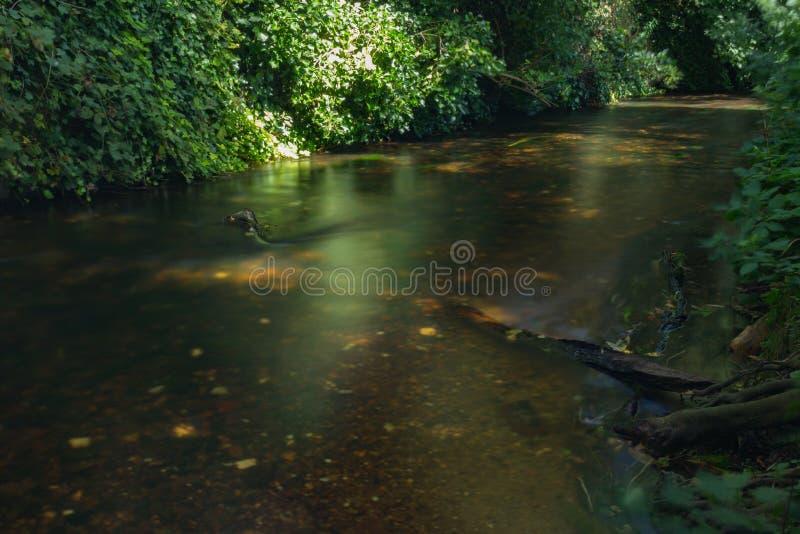Acque scure del fiume di Stour fotografia stock libera da diritti