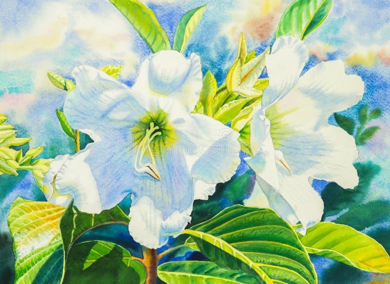 Acquerello che dipinge colore bianco dei fiori realistici del fiore di tromba dell'araldo dell'araldo illustrazione vettoriale