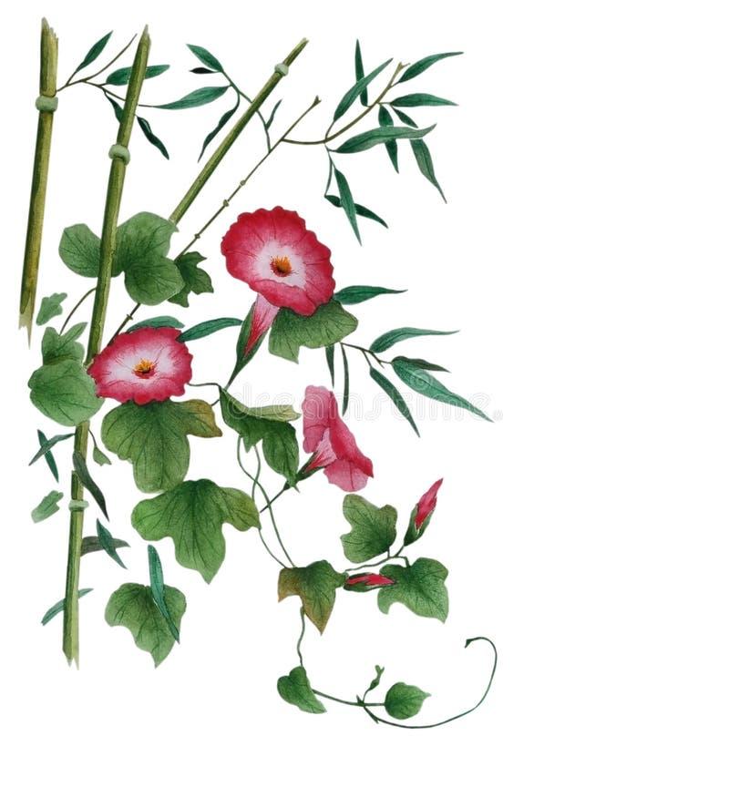Acquerello con le foglie di bambù rosse e del convolvolo illustrazione di stock