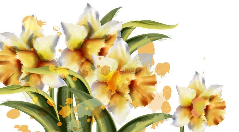 Acquerello di vettore dei fiori del narciso Mazzo di stagione primaverile su fondo bianco Decorazioni romantiche d'annata illustrazione di stock