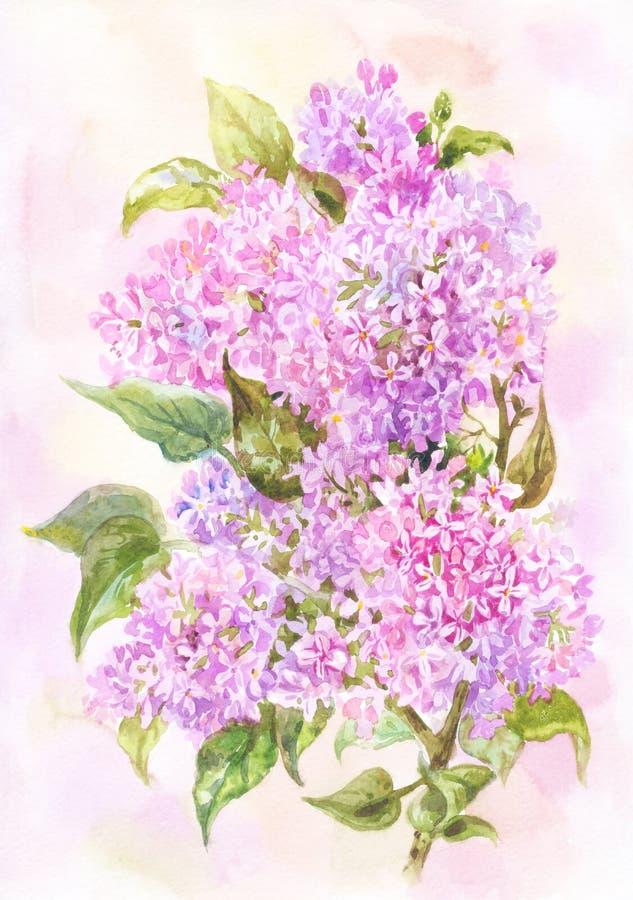 Acquerello leggero di estate o della primavera Filiale di bello lill? Illustrazione o fondo botanica illustrazione di stock