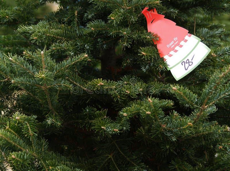 Download Acquisto Dell'albero Di Natale Immagine Stock - Immagine di prezzo, filiale: 3881861