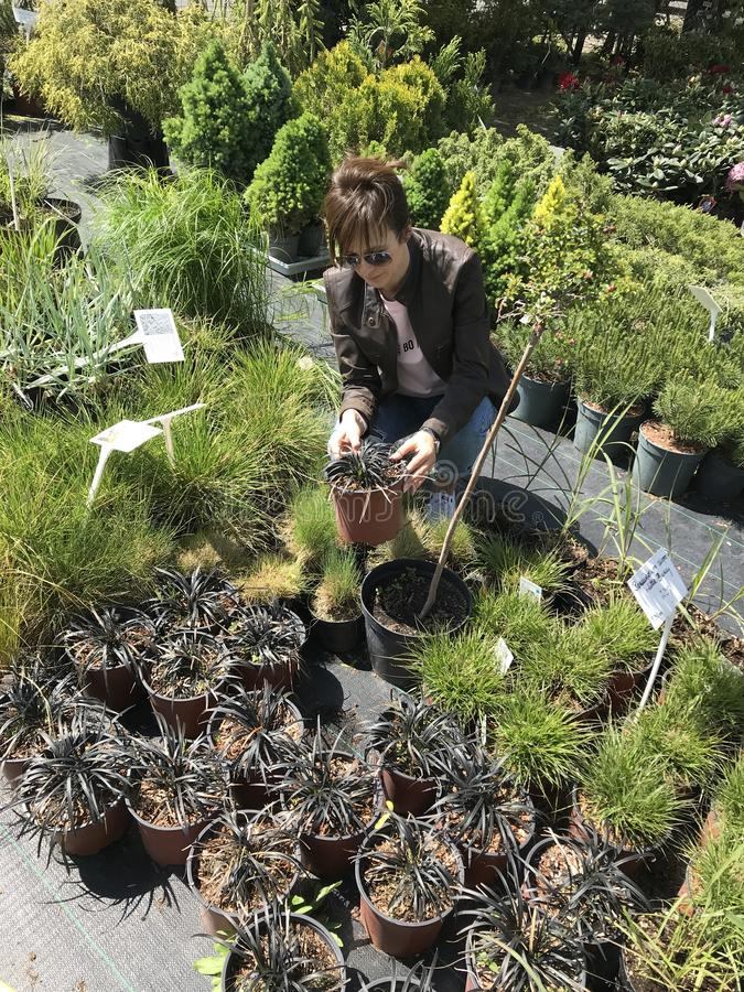Acquisto della donna per le piante ed i fiori nuovi al giardinaggio ed al venditore all'aperto delle piante immagine stock
