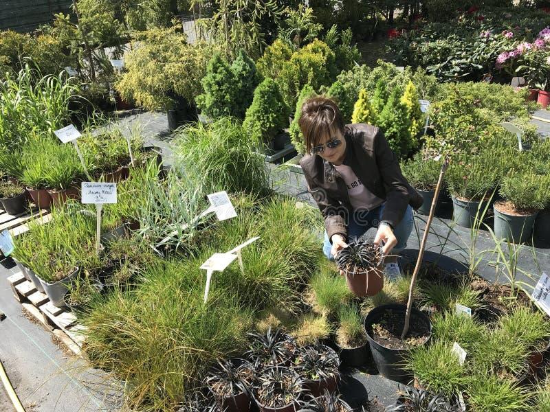 Acquisto della donna per le piante ed i fiori nuovi al giardinaggio ed al venditore all'aperto delle piante fotografia stock