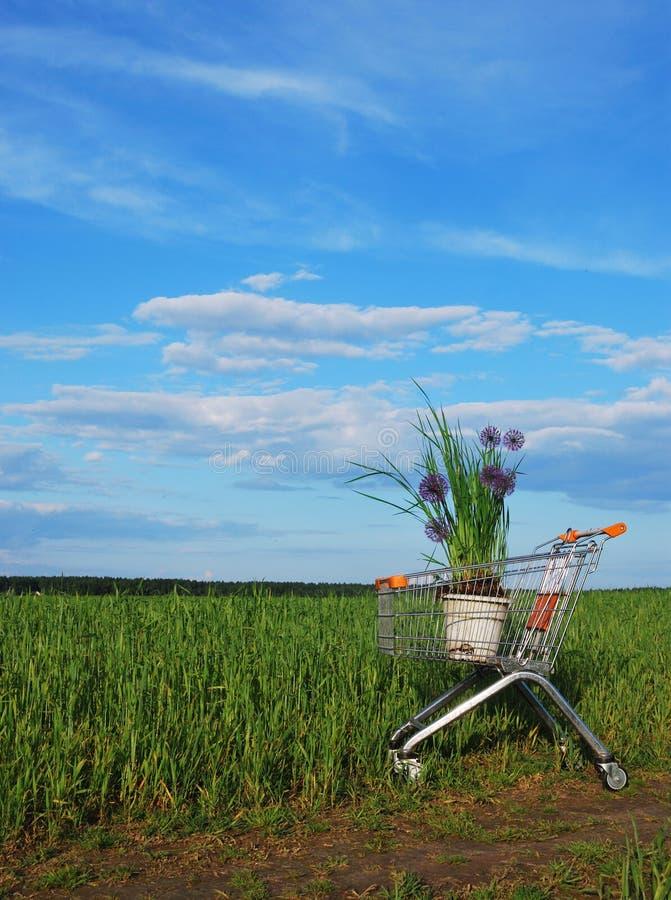 Acquisto verde fotografie stock libere da diritti