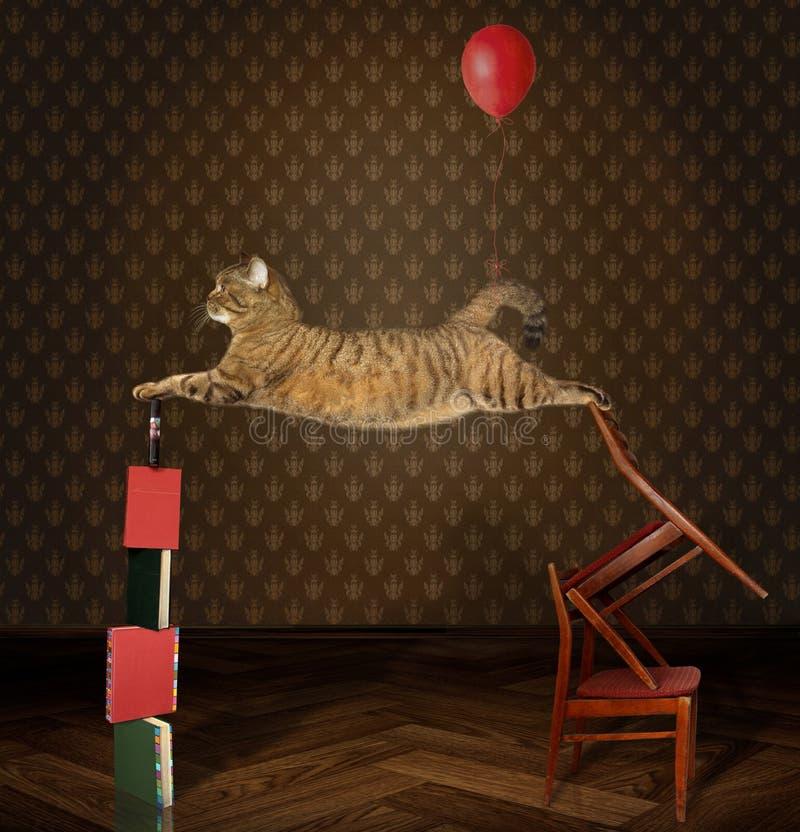 Acróbata del gato en sillas y libros imagen de archivo libre de regalías