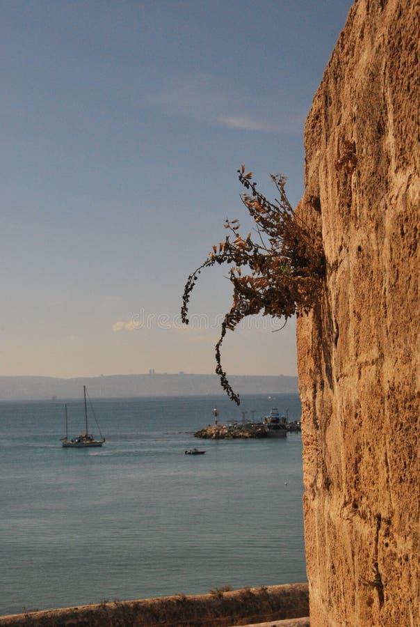Acre/Akko hamn och den gamla city'sväggen royaltyfria bilder