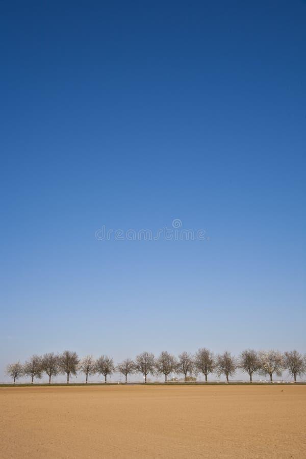 Acre recientemente arado con la fila de árboles imagen de archivo
