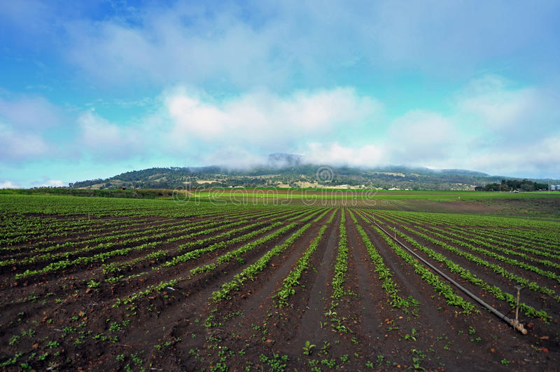 Acres of farming new vegetable crop planting agriculture Australia stock image