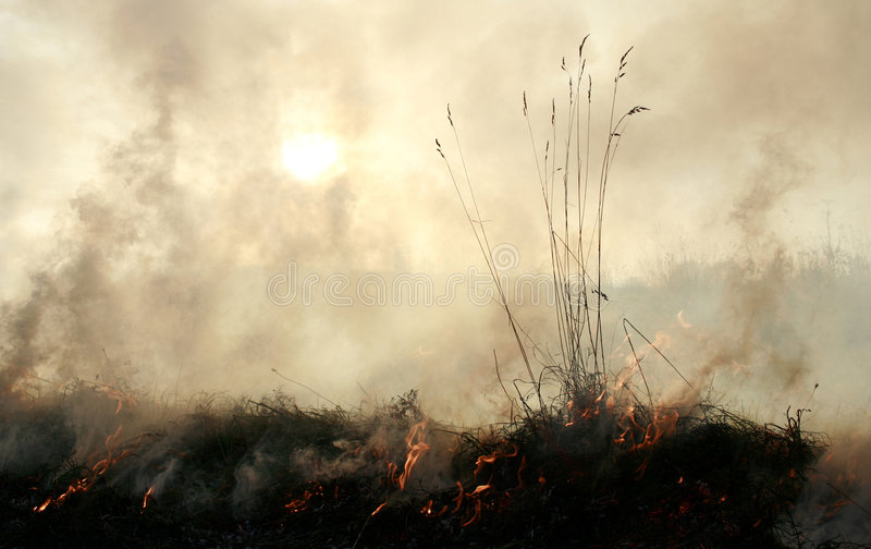 Acrid thick smoke. Meadow fire sends out large smoke clouds after burning a grass wastelands, natural disaster, clouds of acrid thick smoke, meadow as dry as a royalty free stock images