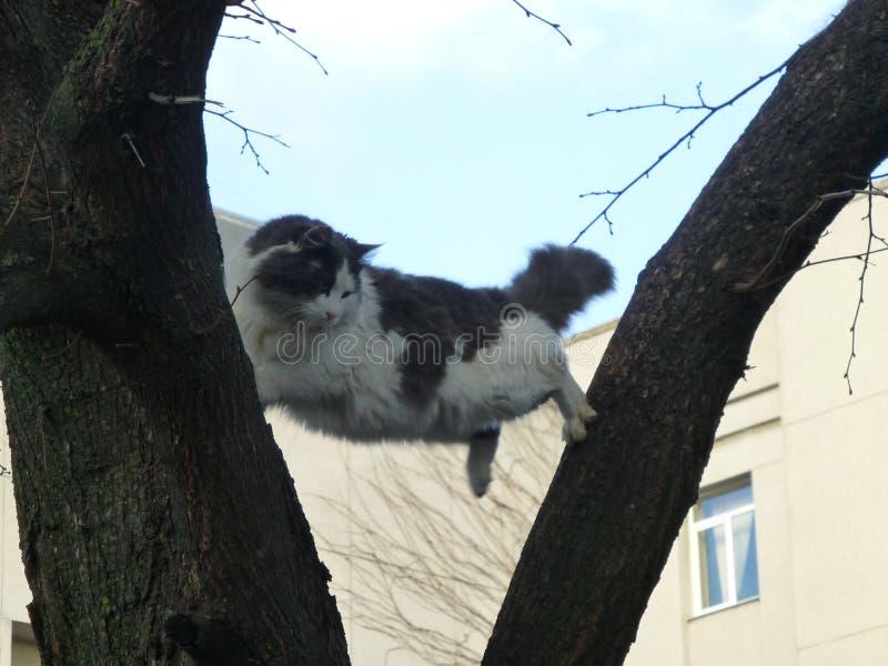 Acrobate sauvage de chat sur l'arbre image libre de droits