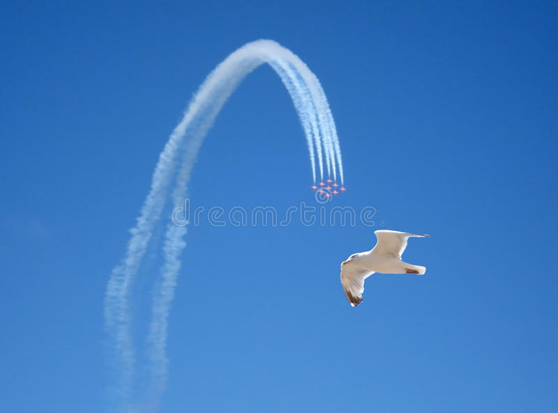 Acrobatic flight and seagull royalty free stock photo