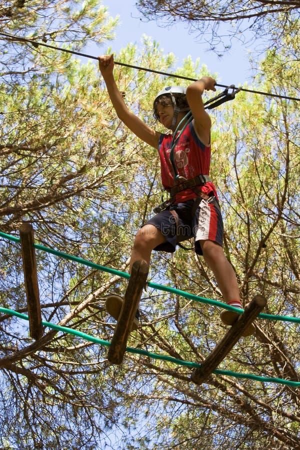 Acrobatics negli alberi immagine stock