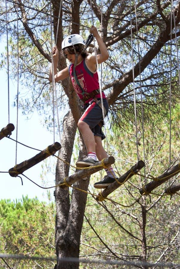 Acrobatiek in de bomen stock foto's