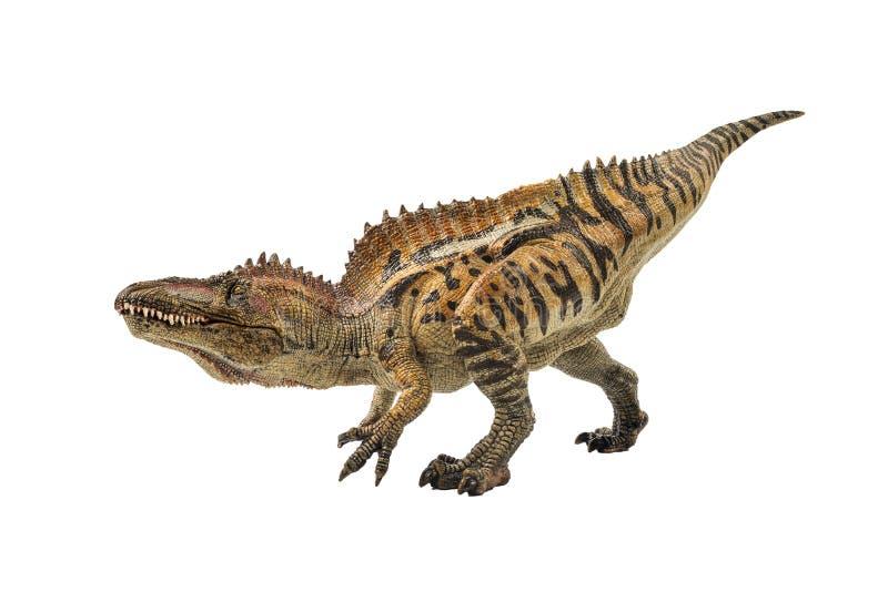 Acrocanthosaurus, δεινόσαυρος στο άσπρο υπόβαθρο στοκ φωτογραφία με δικαίωμα ελεύθερης χρήσης