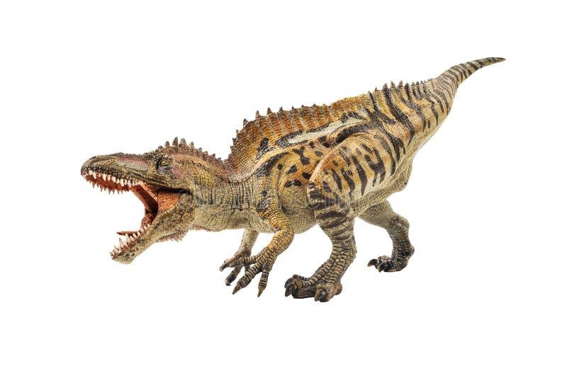 Acrocanthosaurus, δεινόσαυρος στο άσπρο υπόβαθρο στοκ εικόνες