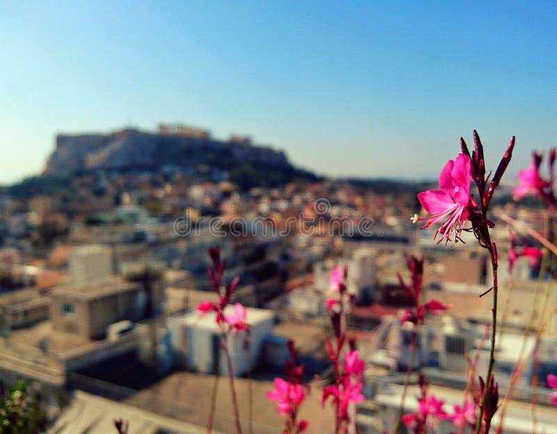 Acropole d'Athènes photos libres de droits