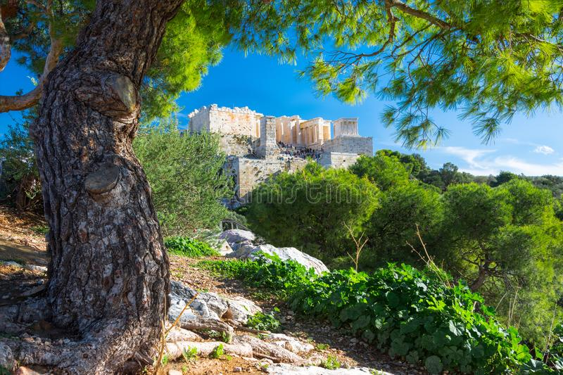 Acropolis with Parthenon. View through a frame of green plants and trees, Athens. Acropolis with Parthenon. View through a frame of green plants and trees royalty free stock photo