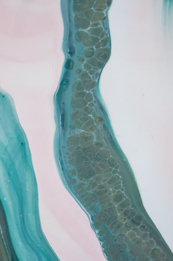 Acryl, Farbe, abstrakt Nahaufnahme der Malerei Bunter abstrakter Malereihintergrund Hoch-strukturierte Ölfarbe Hohe Qualität stockfoto