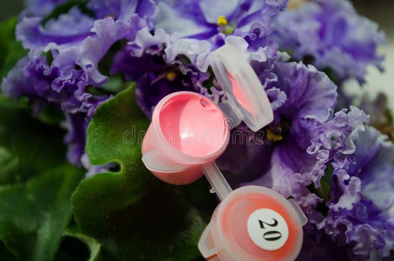 acrylic Acr?lico rosado Pintura rosada Paleta de colores Pintura para dibujar Rosa abierto de la pintura Un tarro de pintura Tarr imagen de archivo libre de regalías