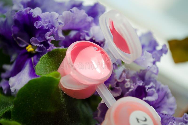acrylic Acr?lico rosado Pintura rosada Paleta de colores Pintura para dibujar Rosa abierto de la pintura Un tarro de pintura Tarr foto de archivo libre de regalías