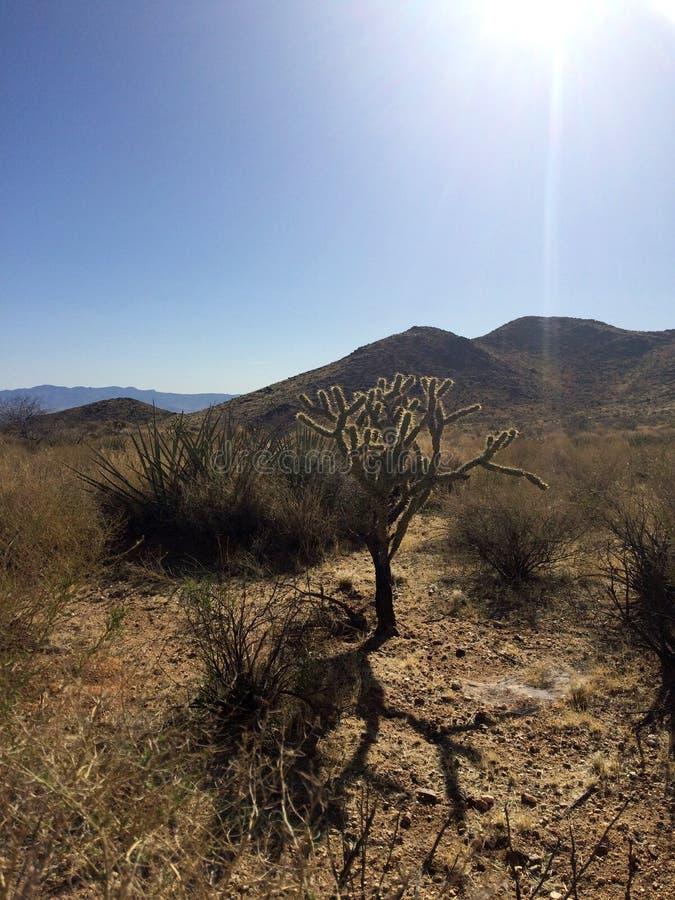 Acti de ¡ de Ð dans le désert de l'Arizona l'arizona LES Etats-Unis photographie stock libre de droits