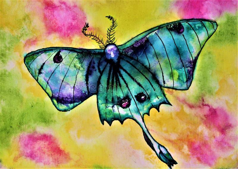 Actias Luna, Luna Moth de la acuarela stock de ilustración