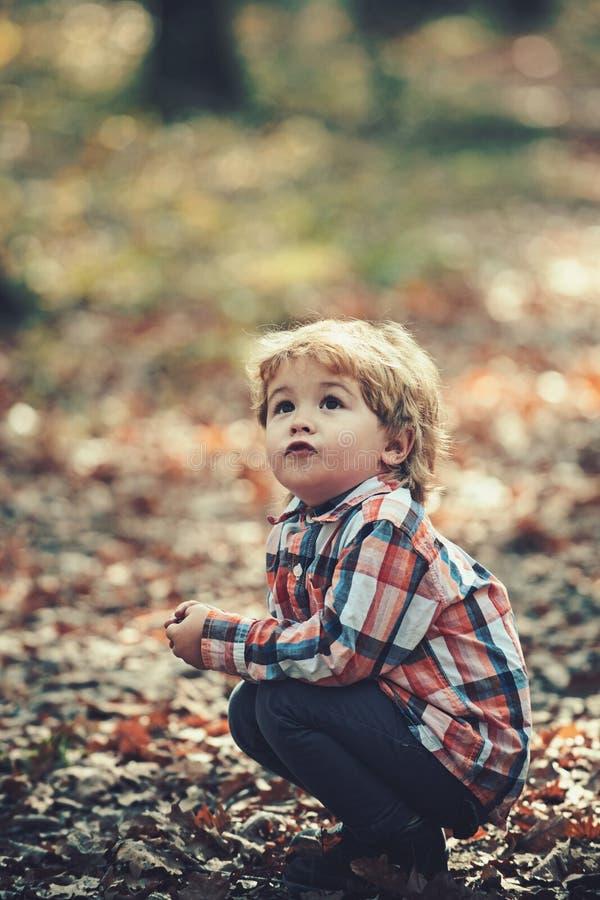 Actief jong geitjespel in de herfst bos Actieve rust op verse lucht voor jong geitje stock fotografie