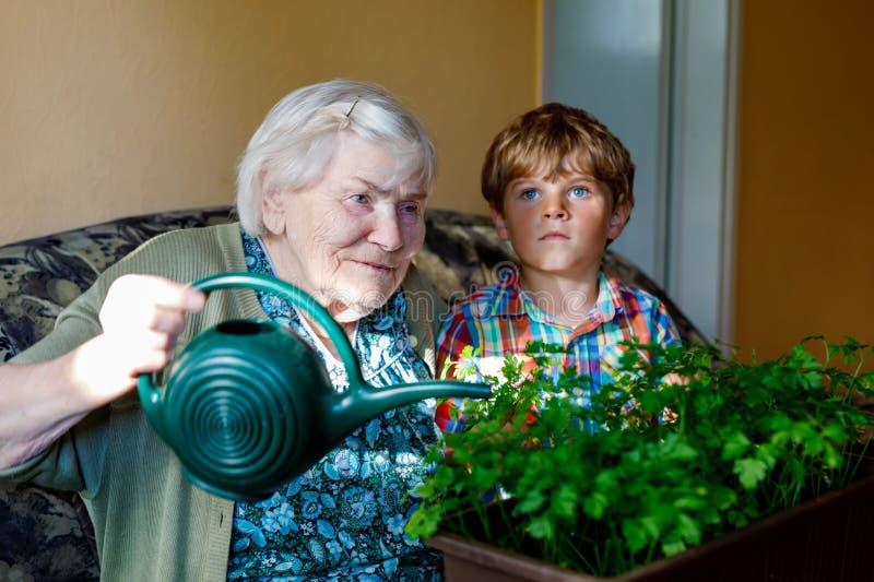 Actief thuis kunnen weinig peuterjong geitjejongen en grote grootmoeder het water geven peterselieinstallaties met water Weinig k royalty-vrije stock afbeeldingen