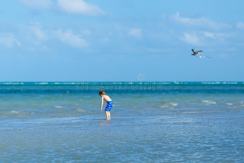 Actief weinig jong geitjejongen die pret op het strand van Miami, Zeer belangrijke Biscayne heeft Gelukkig leuk kind die dichtbij stock fotografie
