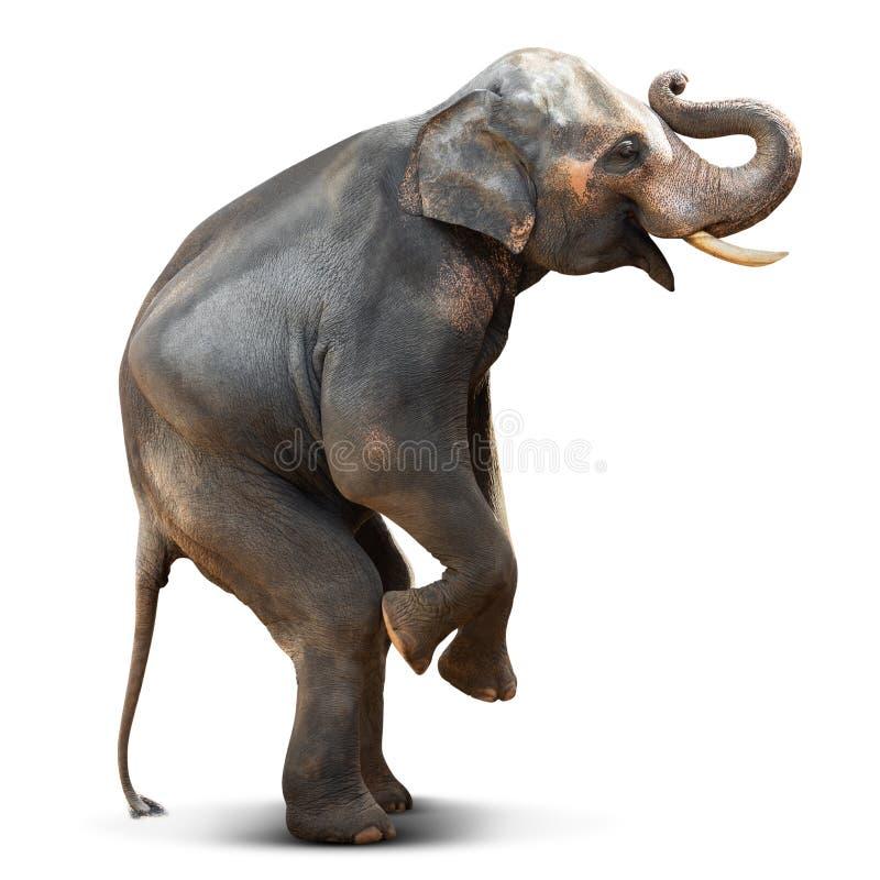 Actiehouding van jonge Aziatische die olifant op witte achtergrond met het knippen van weg wordt geïsoleerd stock foto