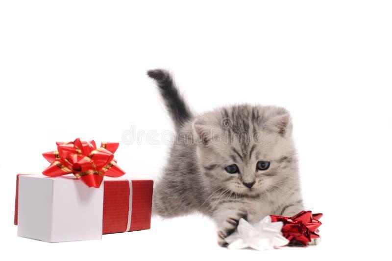 Actieve grijze katje en dozen van giften royalty-vrije stock fotografie