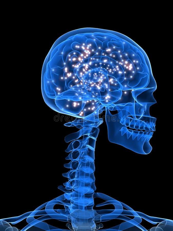 Actieve hersenen royalty-vrije illustratie