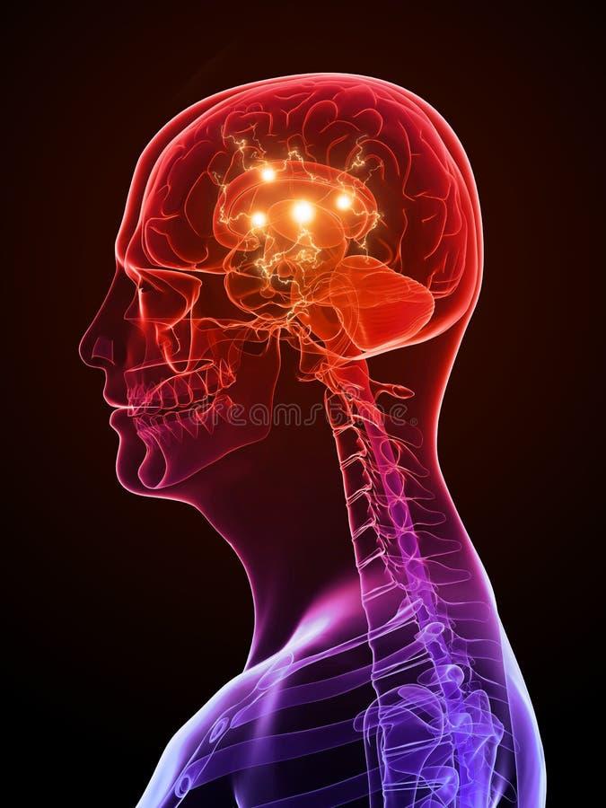 Actieve hersenen stock illustratie