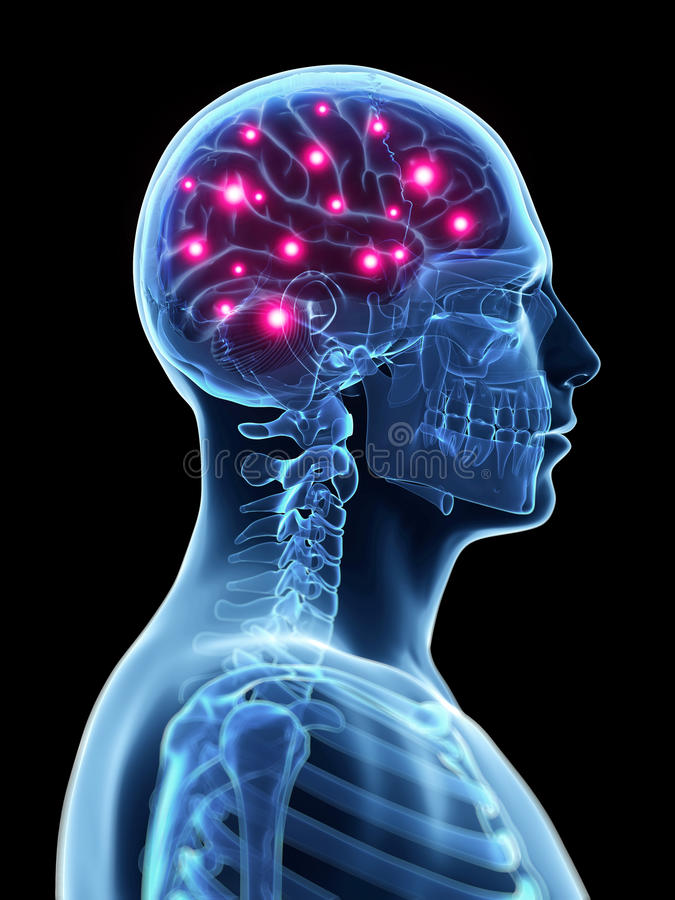 Actieve hersenen vector illustratie