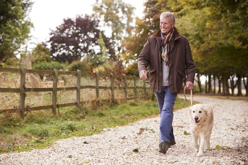 Actieve Hogere Mens op Autumn Walk With Dog On-Weg door Platteland royalty-vrije stock afbeeldingen