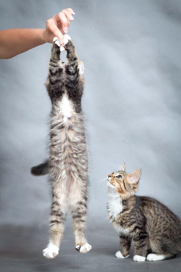Actieve katjessprongen op hand royalty-vrije stock foto's