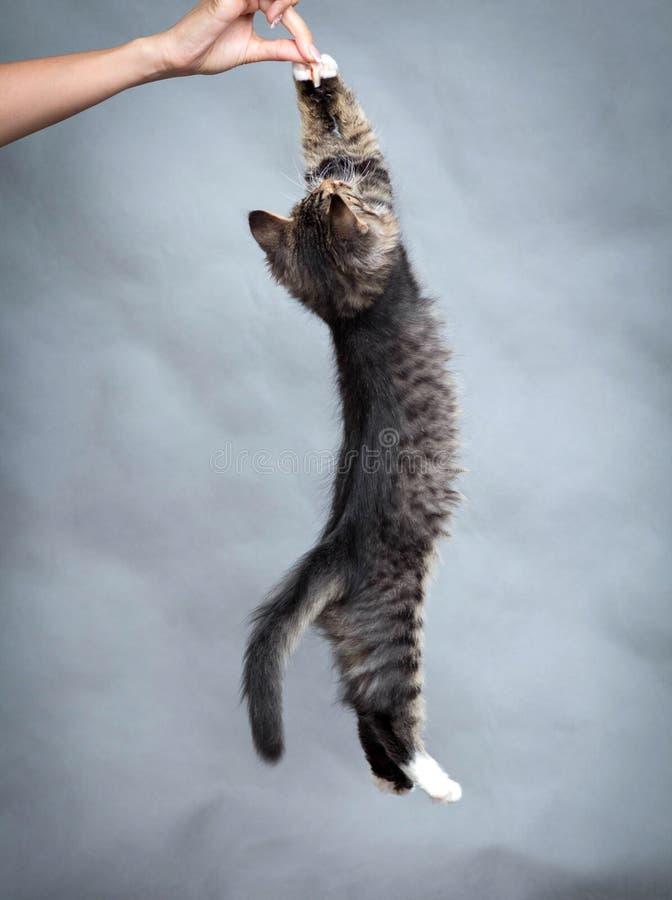 Actieve katjessprongen op voedsel stock foto