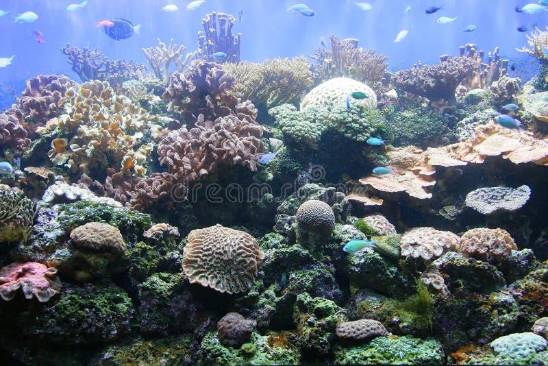 Actinias e corais 4 imagens de stock royalty free
